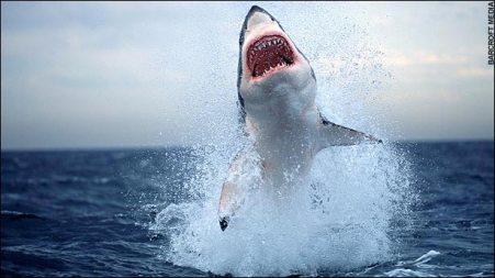 shark08.jpg