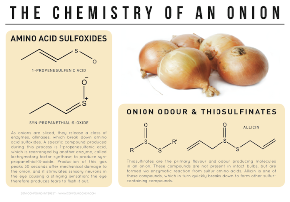 Chemistry-Onion